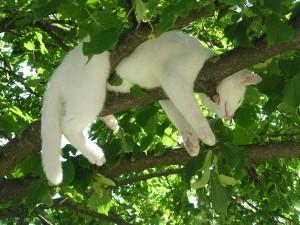 cat-212704_1280