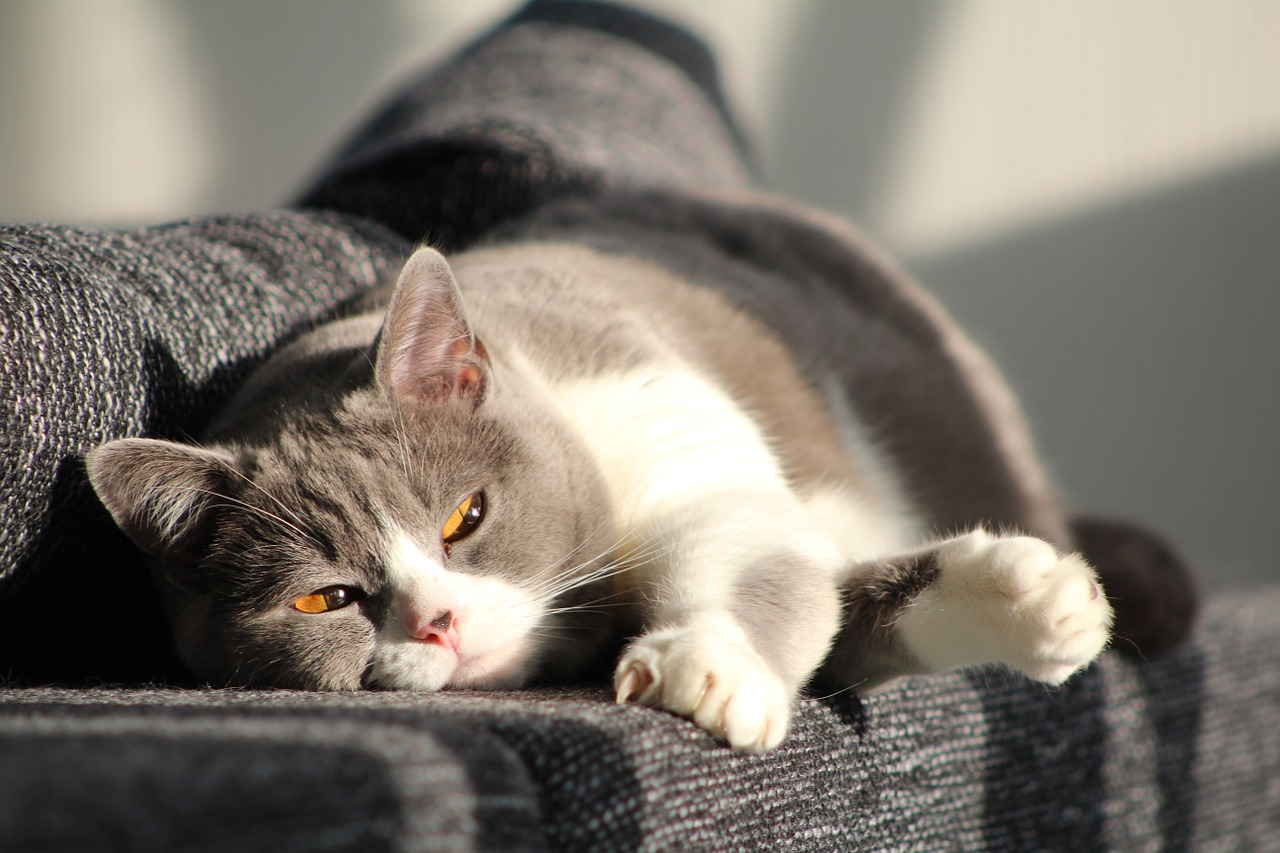 cat-916043_1280
