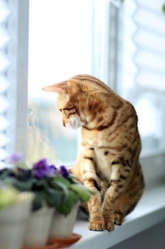 cat-877120_1280